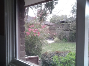 View from my kitchen window